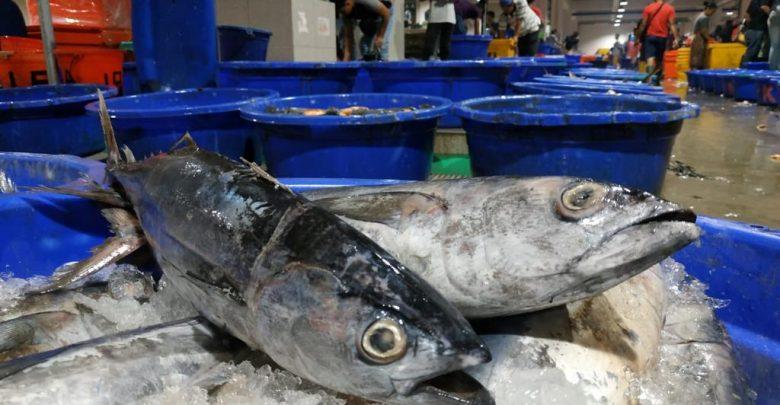 Photo of Dapat Tugas Serap 3.000 Ton Ikan, Perum Perindo Butuh Dukungan Pembiayaan